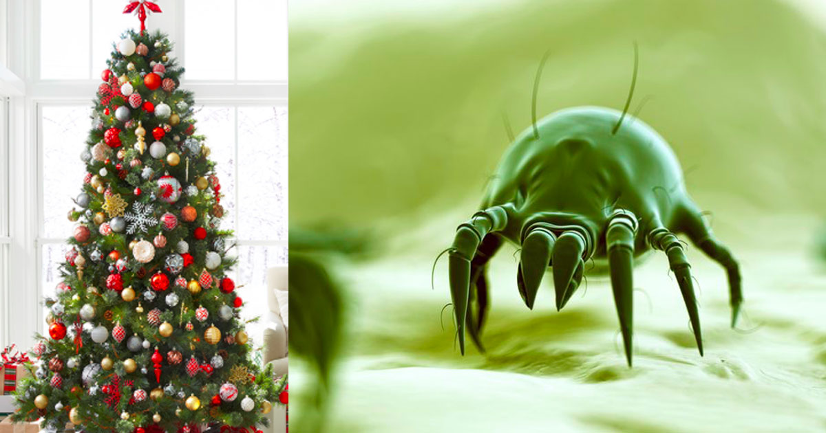 make sure to take your christmas tree down quick its likely crawling with bugs - When Are You Supposed To Take Your Christmas Tree Down